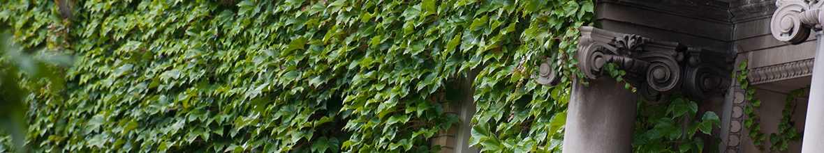 Ivy on a building