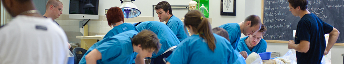 Students working in D'Youville's gross anatomy lab.